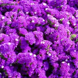 Lavendel Pflanzen Kaufen : pflanzen billig kaufen laubhecke schneiden pflanzen und ~ Lizthompson.info Haus und Dekorationen