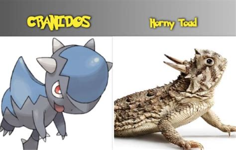 Horny Toad Meme - cranidos reptile pokemon horny toad pok 233 mon go reptile horned lizard pokemon reptile pokemon