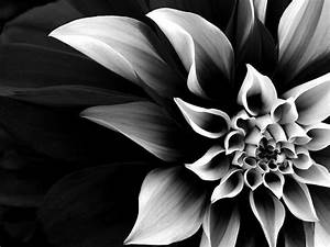 Black and White Flowers wallpaper | 1024x768 | #846
