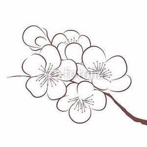 Dessin Fleur De Cerisier Japonais Noir Et Blanc : les 25 meilleures id es de la cat gorie dessin fleur sur ~ Melissatoandfro.com Idées de Décoration