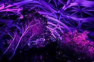 Amazon Spheres and other Seattle landmarks lit up in ...  Purple