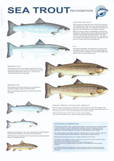 dalguise fishings tackle advice