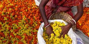 Indian Flower Garlands: A Guide to the Indian Culture