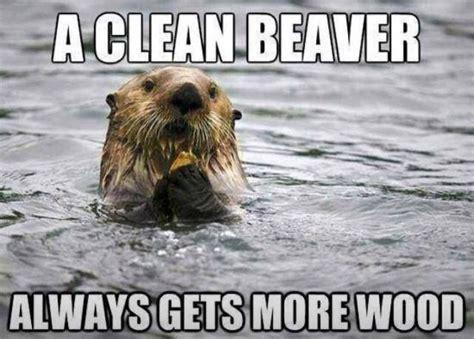 Beaver Meme - funny beaver quotes image quotes at hippoquotes com