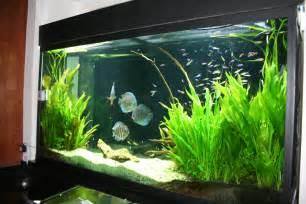 Best Plants For Bathroom Without Window by Landscape Aquarium Design