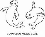 Seal Coloring Clipart Monk Colouring Drawing Animal Printable Animals Hawaiian Sketch Harp Sheet Jam Template Animalstown Designlooter Ocean Webstockreview sketch template