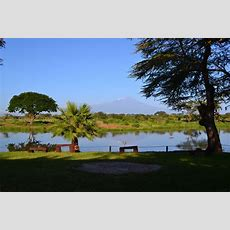 Filemount Kilimanjaro From The Sante River Within The