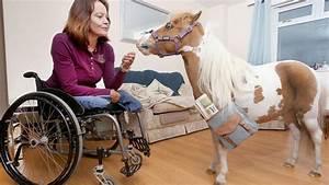 U2018guide Horses U2019 To Help The Blind