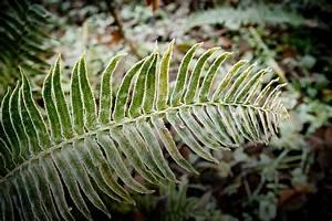 Plants, Information, About, Native, Northwest, Plants, At, Northwest, Trek