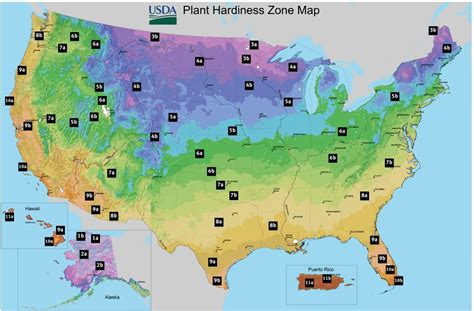 Hardiness Zones In The Usa