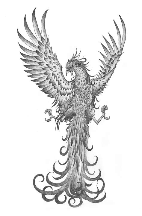 Attractive Grey Ink Flying Phoenix Tattoo Design By Amanda
