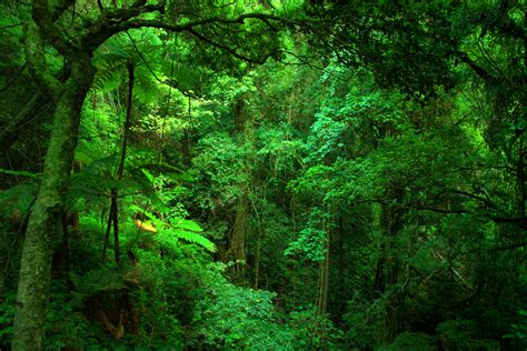 Why Are Rainforests Important? Wonderopolis