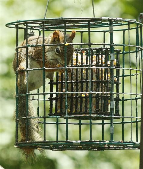 squirrel proof suet feeder