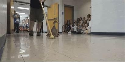Teacher Through Duck Pat Hallway Walk Animated
