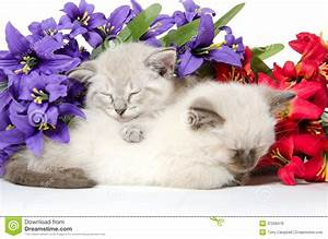 Two Cute Kittens Sleeping Royalty Free Stock Images ...