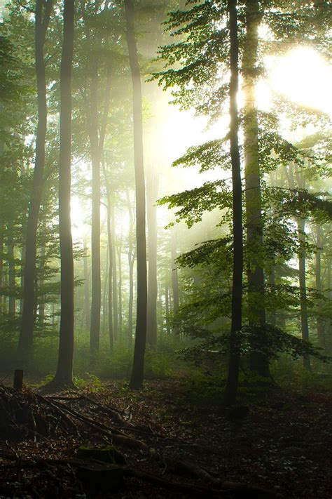 trees forest germany sunlight hdr photography pine