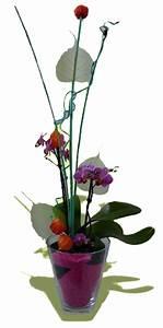 Sonnenglas Selber Machen : pflanzen im glas pflanze im glas pflanzen im glas glasbiotope westfach originelle blument pfe ~ Orissabook.com Haus und Dekorationen