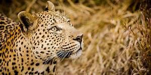 Sabi Sabi Private Game Reserve