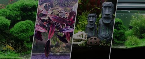 Aquascaping For Beginners by Aquascaping Tips For Beginners Experienced