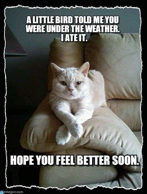 Get Well Soon Cat Meme  Extravital Fasion Cats