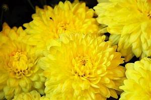 Information About Yellow Flowers Names And Pictures Yousense Info