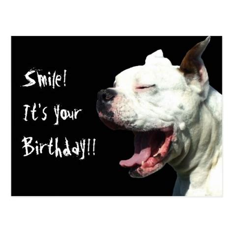 Funny Boxer Dog Memes - 25 best ideas about happy birthday dog meme on pinterest happy birthday with dogs happy