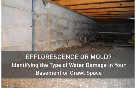 efflorescence  mold identifying  type  water