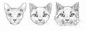 How to Draw Cats: Step by Step with Monika Zagrobelna