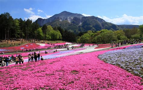glass for crafts top 6 flower spots in saitama all about