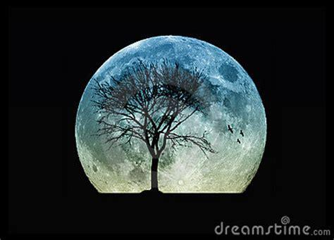 tree silhouette   moon stock photo image