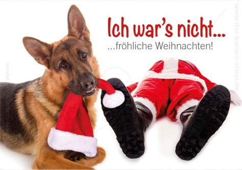 Bildergebnis für weihnachtsbilder mit hund