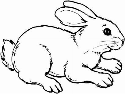 Rabbit Outline Coloring Bunny Drawing Drawings Pages
