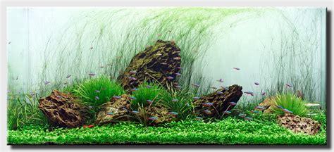 Hair Grass Aquascape by Hair Grass Aquascaping World Forum