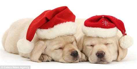 The Cute Christmas Pictures That Will Melt Even The