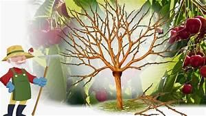 Taille De Cerisier : taille cerisier nous sommes de nouveau sollicit pour ~ Melissatoandfro.com Idées de Décoration