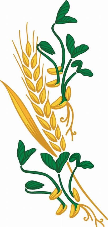 Wheat Clipart Grain Harvest Whole Transparent Bag