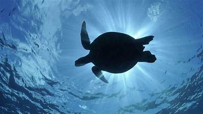 Turtle Wallpapers Cave