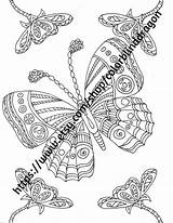 Coloring Flower Pages Butterfly Anemone Etsy Spring Nature Garden Flowers Beds Bed sketch template