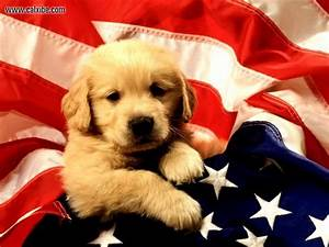 Miscellaneous: Dog and american flag, picture nr. 12676