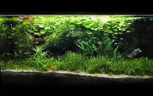 Aquarium Pflanzen Schnellwachsend : fadenalgen u a hilfestellung danke aquarium forum ~ Frokenaadalensverden.com Haus und Dekorationen