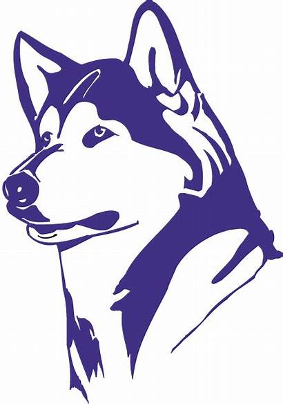 Huskies Washington Husky University Uw Purple Svg