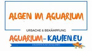 Algen Dünger Kaufen : algen im aquarium ursache und bek mpfung was hilft ~ Whattoseeinmadrid.com Haus und Dekorationen