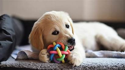 Puppy Essentials Owners Checklist Jul Mary Pet