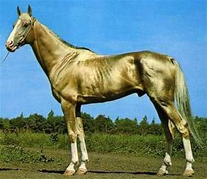 Is This The Most Beautiful Horse In The World? We Think So