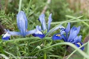 Blau De Meine Rechnung : blau gelb lila oh ihr meine sch nen fr hbl her vorstadt tr ume ~ Themetempest.com Abrechnung