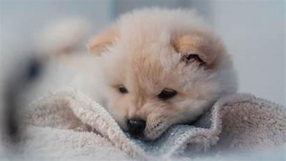 Puppy Dog Fluffy Pet