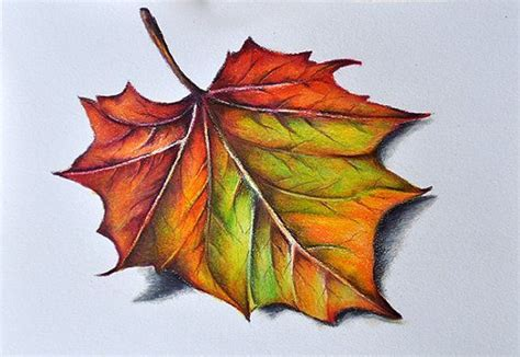pin  michelle jackson  natural forms   pencil