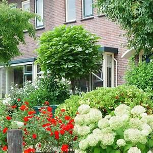 Kleine Bäume Für Vorgarten : kugelbaum f r kleinen garten ~ Sanjose-hotels-ca.com Haus und Dekorationen