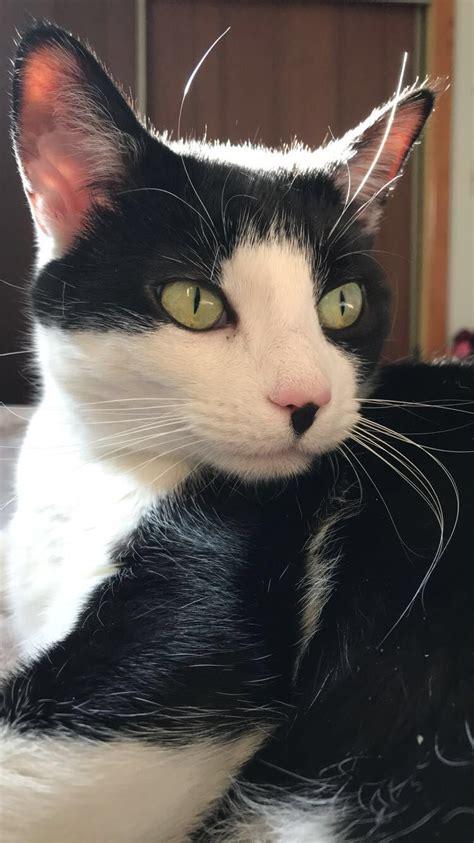 cat lady nosy tuxedo named crazy names cats