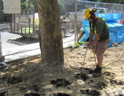 central tree care full service tree care